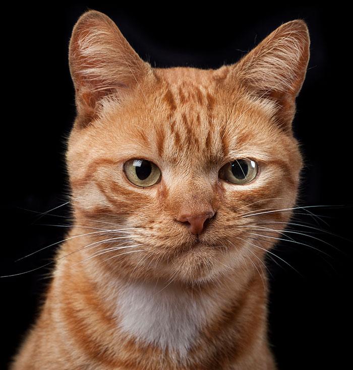Hago retratos personales de perros, gatos y caballos