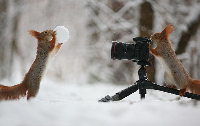 Este fotógrafo ruso realizó la mejor sesión fotográfica con ardillas que hayas visto