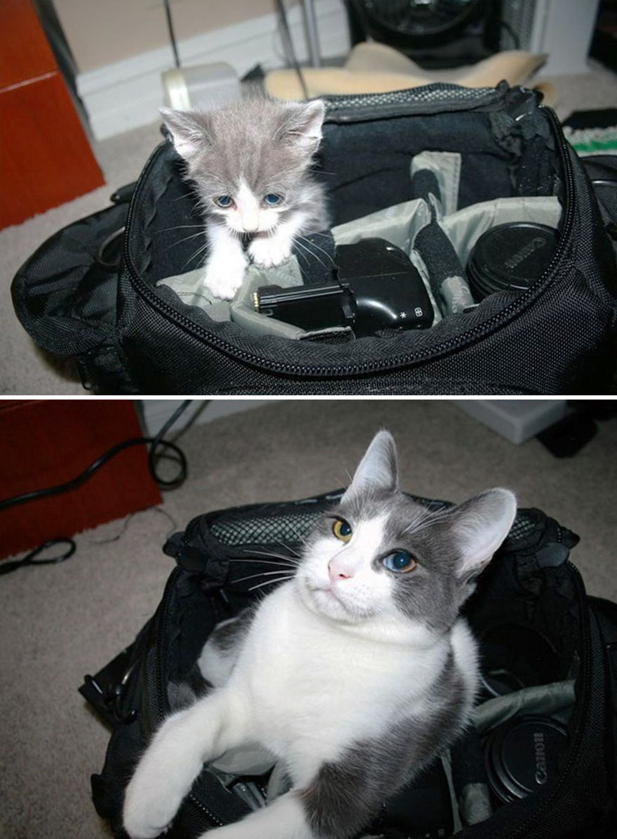 gatos-creciendo-antes-despues (1)