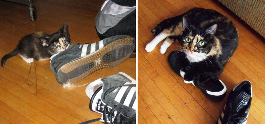 gatos-creciendo-antes-despues (10)