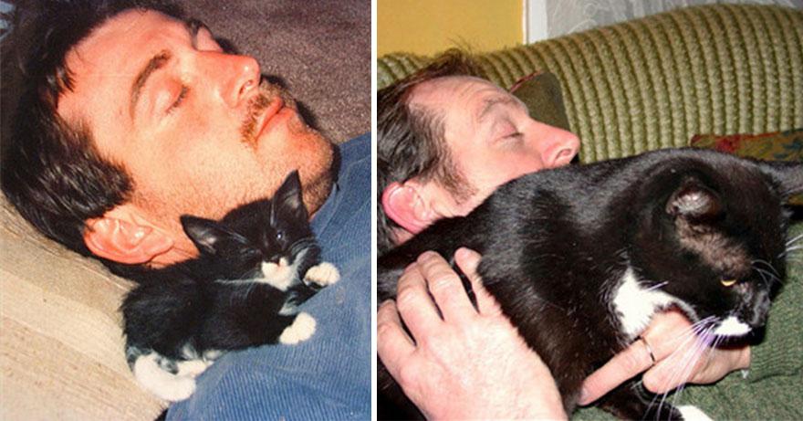 gatos-creciendo-antes-despues (11)