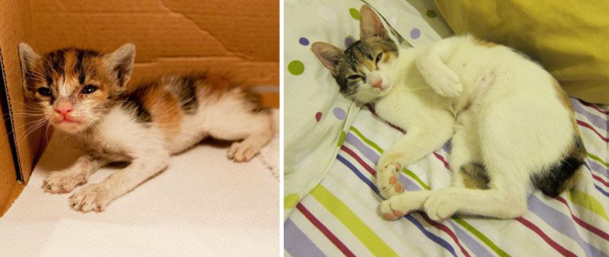 gatos-creciendo-antes-despues (15)
