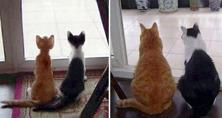 gatos-creciendo-antes-despues (17)