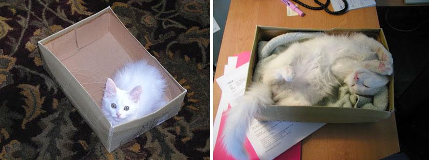 gatos-creciendo-antes-despues (19)