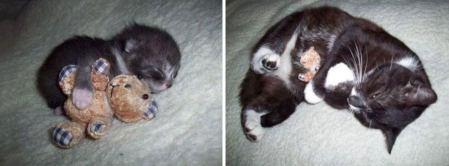 gatos-creciendo-antes-despues (2)
