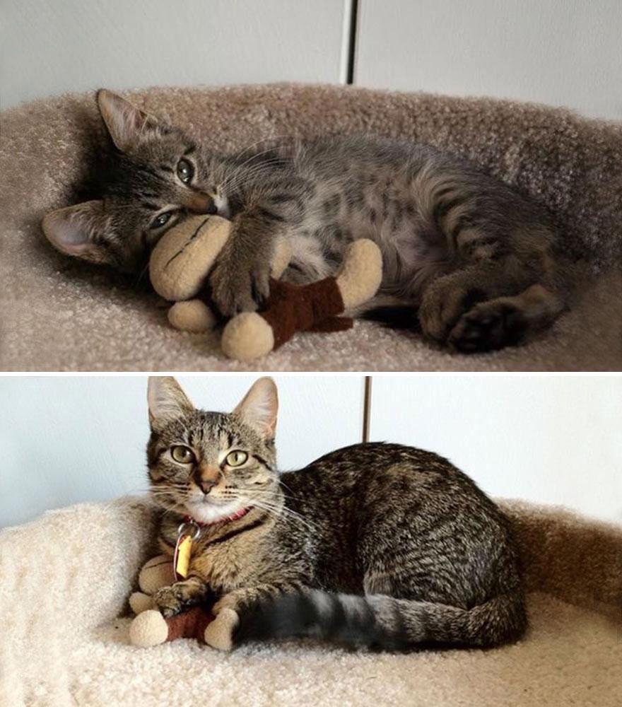 gatos-creciendo-antes-despues (20)