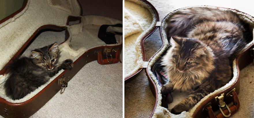 gatos-creciendo-antes-despues (25)