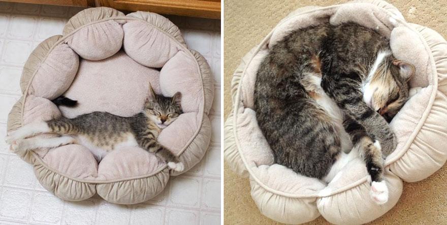 gatos-creciendo-antes-despues (4)