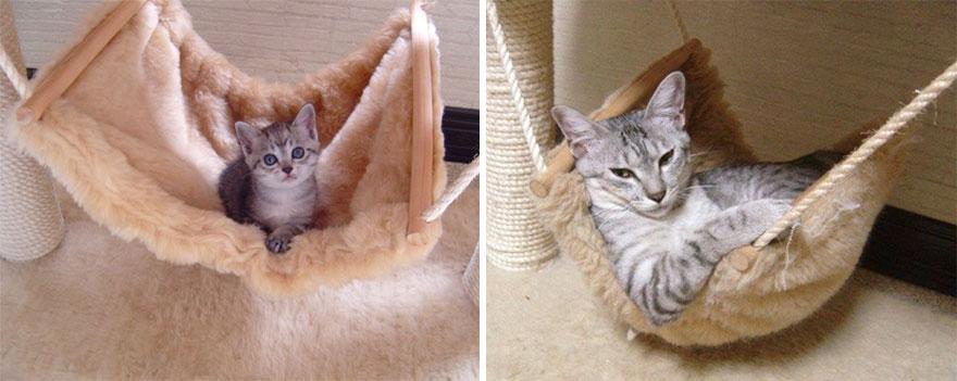 gatos-creciendo-antes-despues (7)