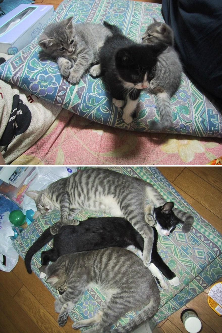 gatos-creciendo-antes-despues (8)