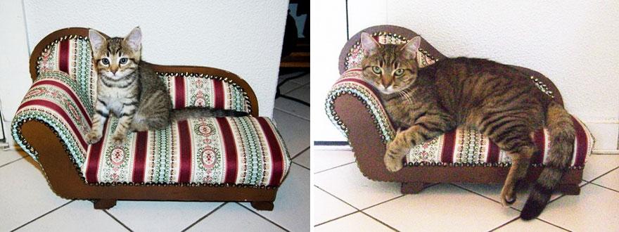 gatos-creciendo-antes-despues (9)