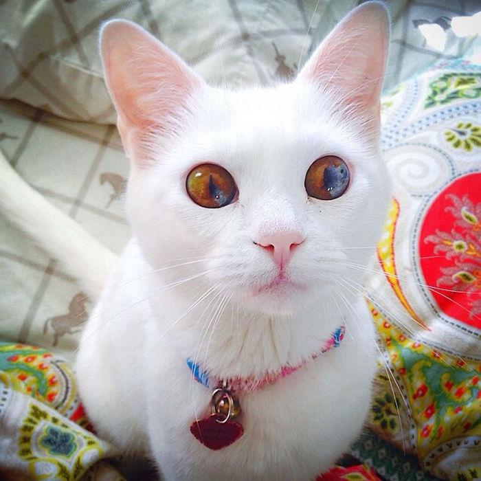 20 Animales inusualmente bonitos con ojos de distinto color | Bored ...