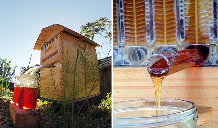 Un nuevo modelo de colmena permite recolectar miel automáticamente sin molestar a las abejas