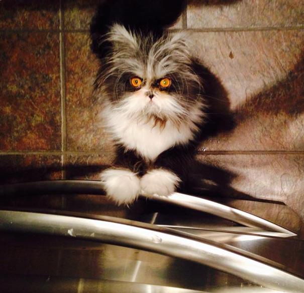 ojos-gato-peludo-atchoum (11)