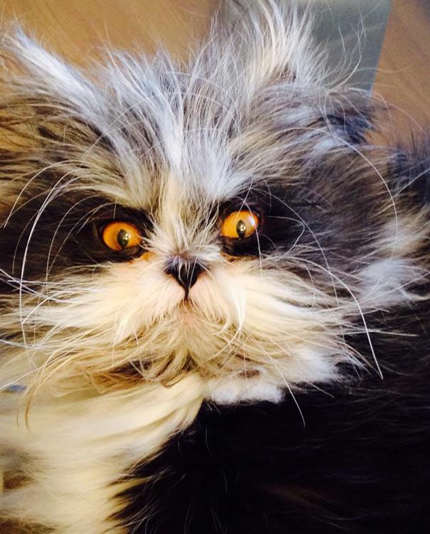 ojos-gato-peludo-atchoum (12)