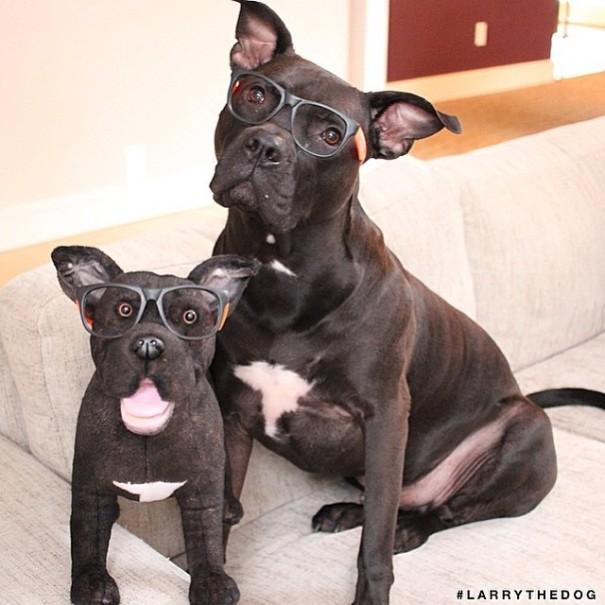 replicas-peluche-animales-mascotas-cuddle-clones (11)