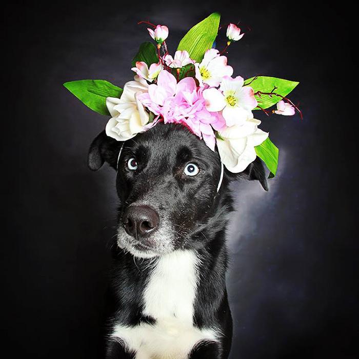 Preciosos retratos de perros negros para ayudar a que sean adoptados