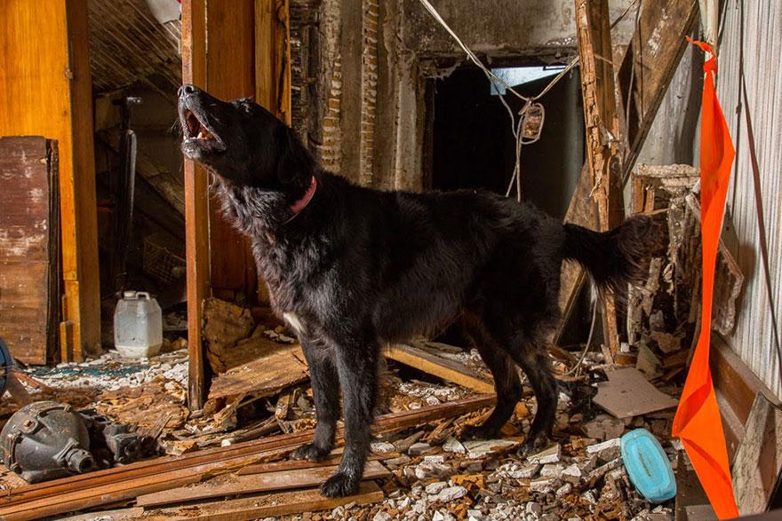 retratos-perros-trabajadores-andrew-fladeboe (10)