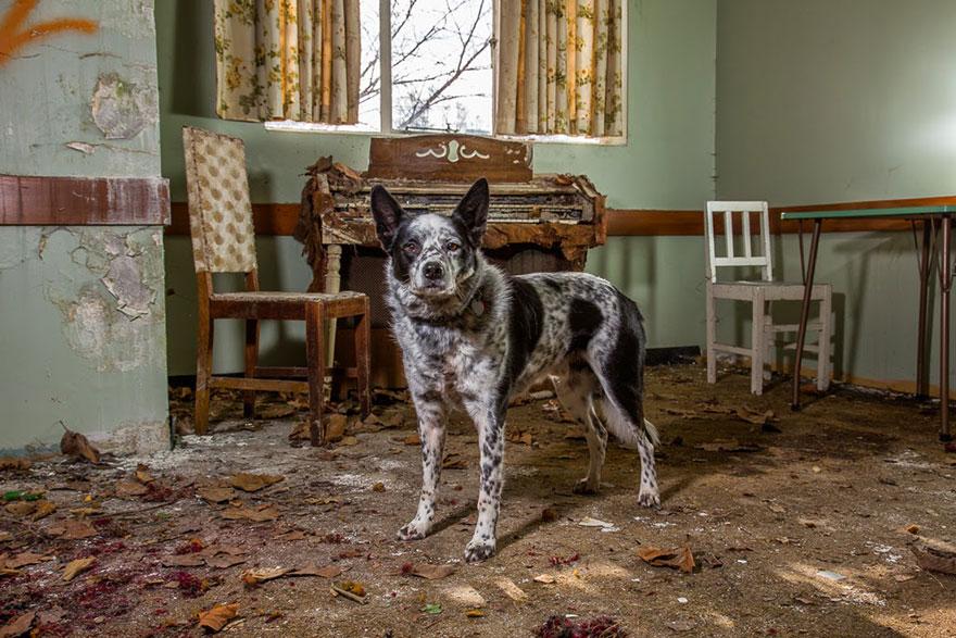 retratos-perros-trabajadores-andrew-fladeboe (11)