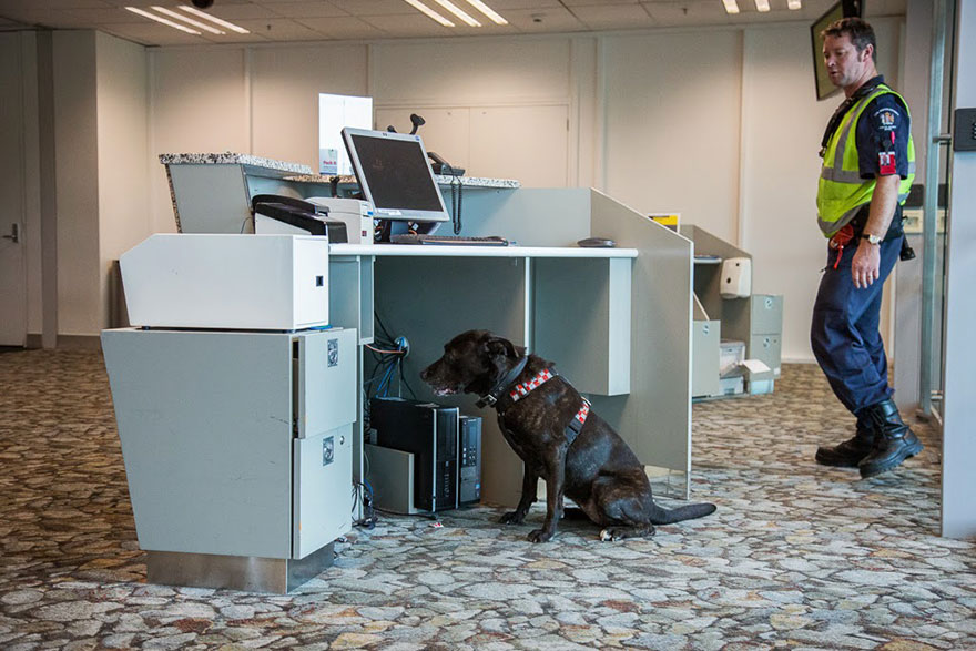 retratos-perros-trabajadores-andrew-fladeboe (12)