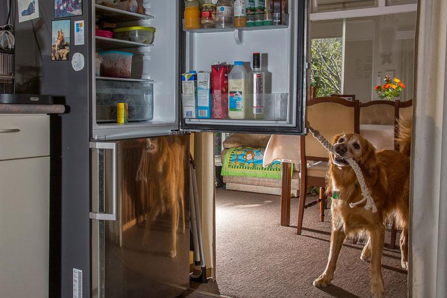 retratos-perros-trabajadores-andrew-fladeboe (19)