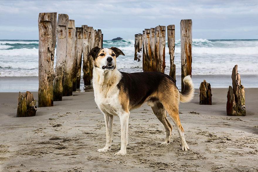 retratos-perros-trabajadores-andrew-fladeboe (4)