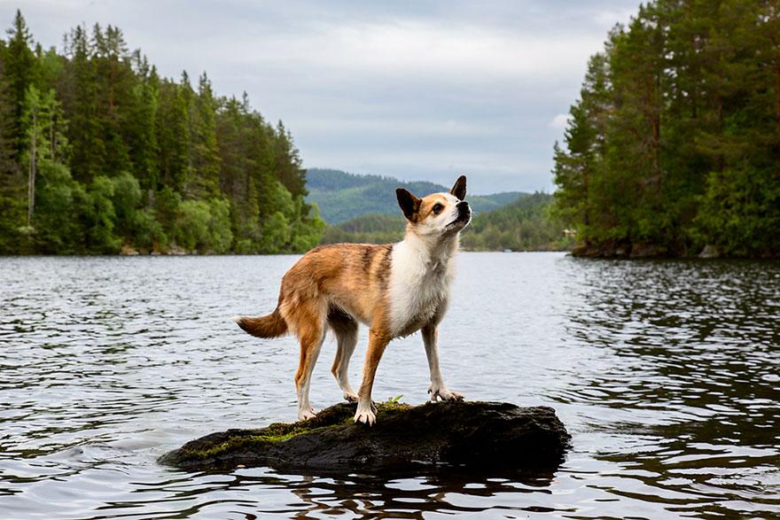retratos-perros-trabajadores-andrew-fladeboe (6)