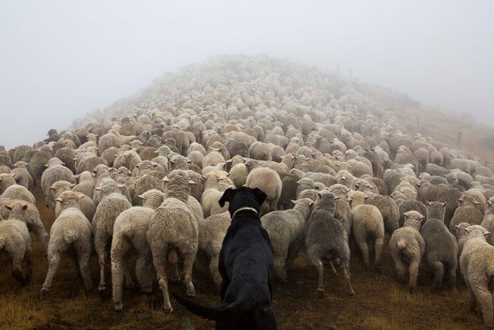 Este fotógrafo retrata a los perros más trabajadores del mundo