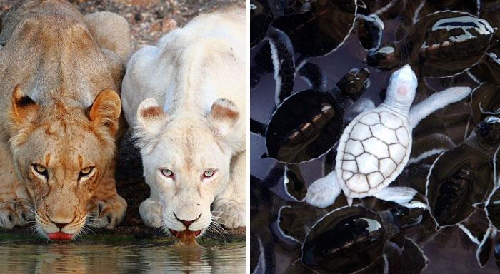 20 Animales albinos que no necesitan colores para ser geniales