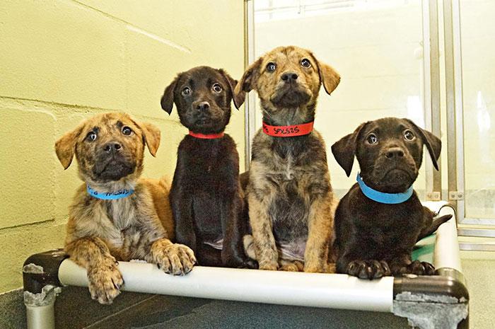 Este refugio de animales ofrece reparto de mascotas a oficinas para reducir el estrés y ayudar en su adopción