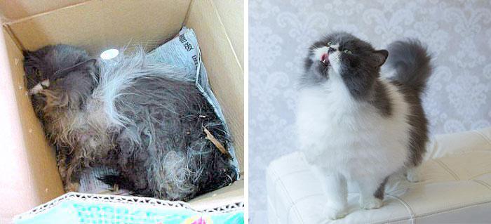 antes-despues-gatos-rescatados (2)
