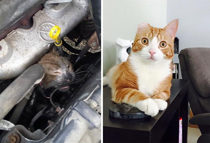 antes-despues-gatos-rescatados (7)