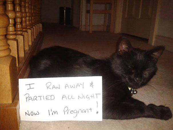 castigo-gatos-avergonzar (1)