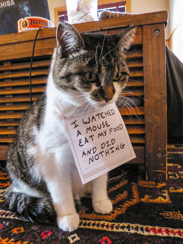 castigo-gatos-avergonzar (3)