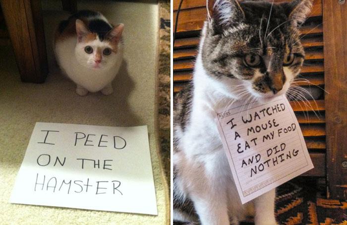 20 Gatos malos siendo avergonzados por sus crímenes