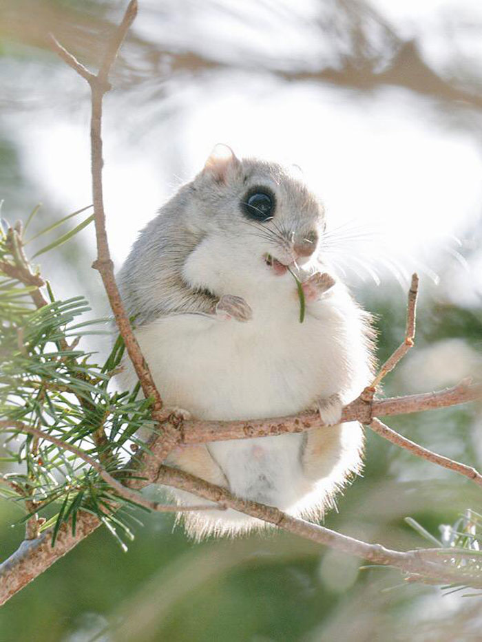 La isla japonesa de Hokkaido es el hogar de estos 7 animales adorables