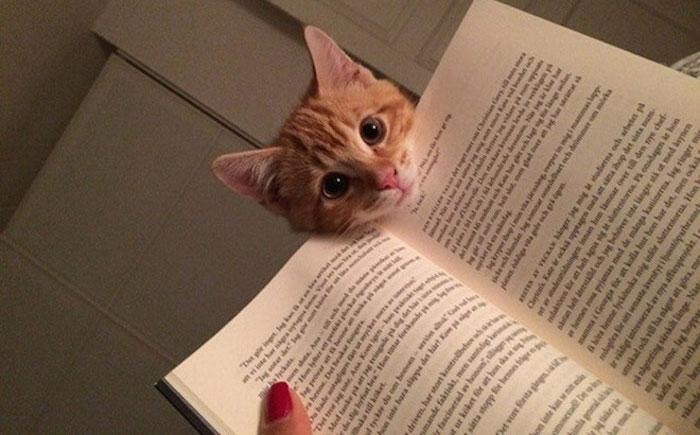 20 Gatos que necesitan tu atención justo cuando empiezas a leer
