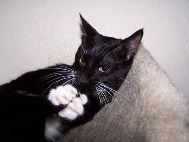 gatos-malvados-planean-asesinato (12)