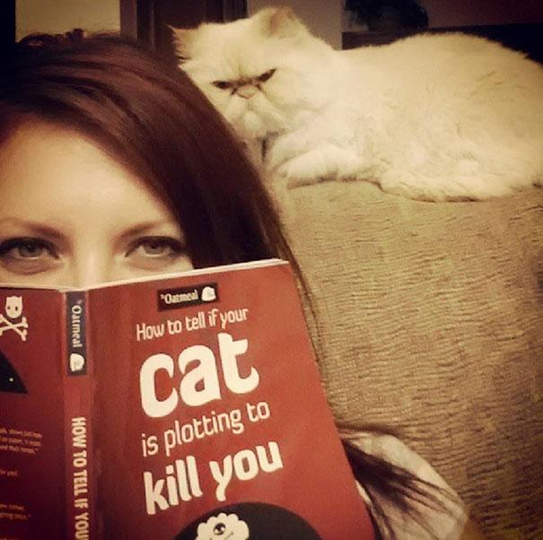 gatos-malvados-planean-asesinato (13)