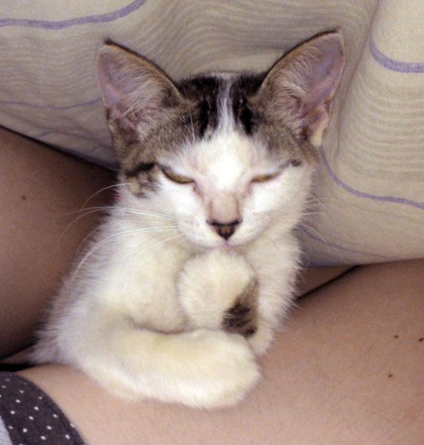 gatos-malvados-planean-asesinato (14)
