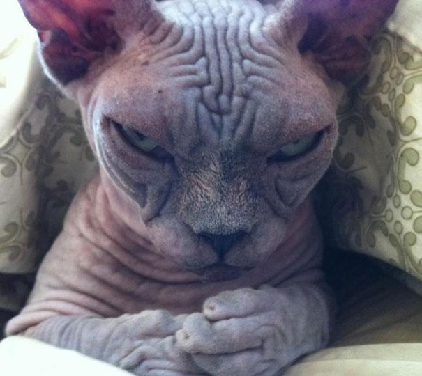 gatos-malvados-planean-asesinato (15)