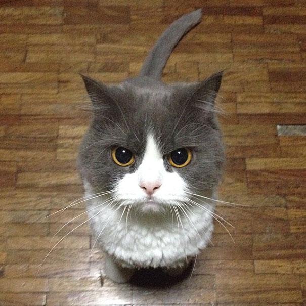 gatos-malvados-planean-asesinato (16)
