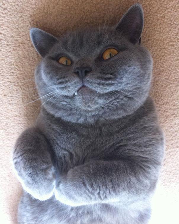 gatos-malvados-planean-asesinato (18)
