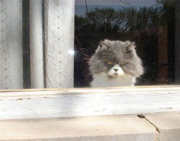 gatos-malvados-planean-asesinato (2)