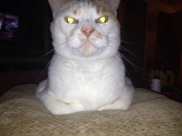 gatos-malvados-planean-asesinato (20)
