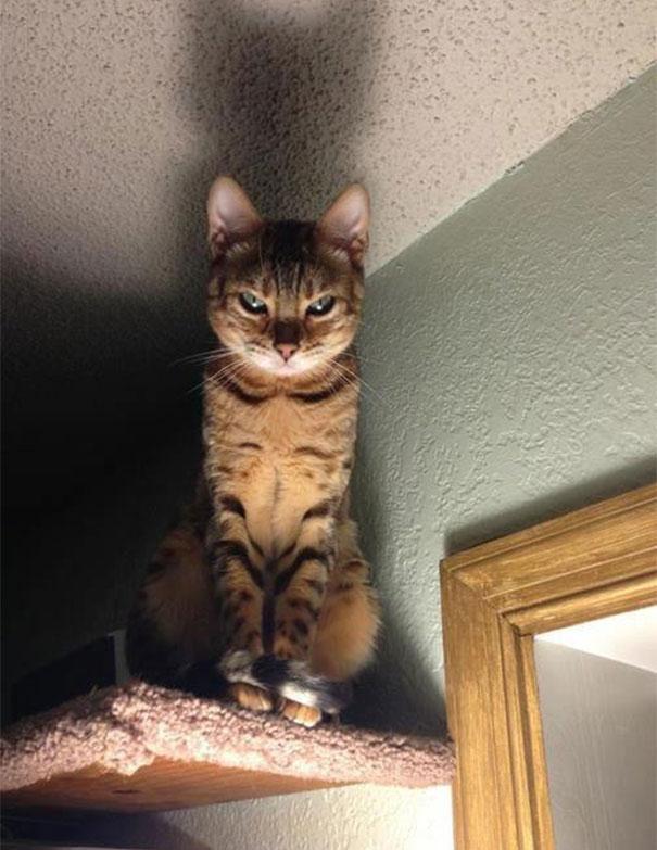 gatos-malvados-planean-asesinato (22)