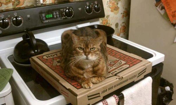 gatos-malvados-planean-asesinato (23)