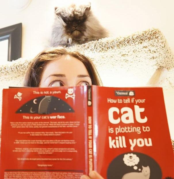 gatos-malvados-planean-asesinato (25)