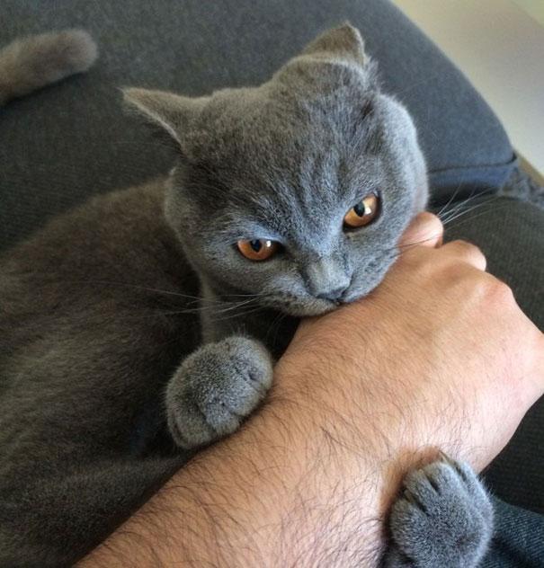 gatos-malvados-planean-asesinato (3)