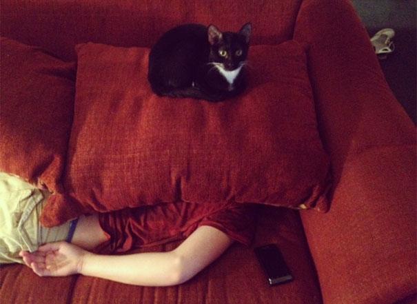 gatos-malvados-planean-asesinato (6)